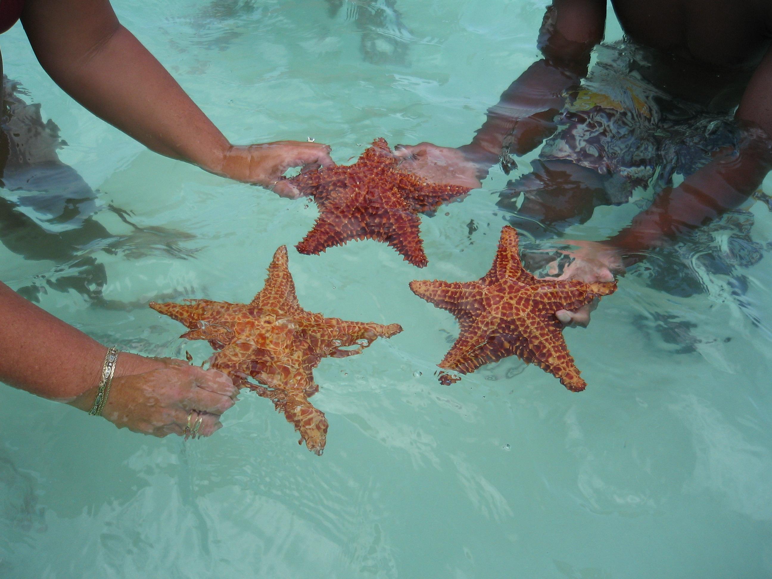 Touching Hearts  Starfish  Asteroidea